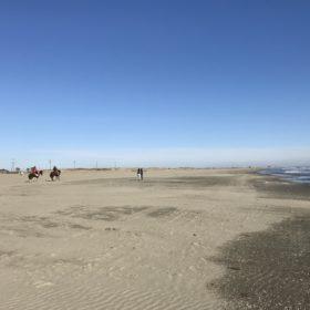 犬連れ旅行で千葉の海に行くなら、九十九里浜の本須賀海岸で決まり